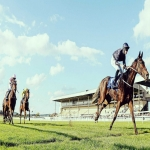 Racehorse shares in Warwickshire 5