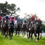 Horse Racing Syndicates in Alford 9