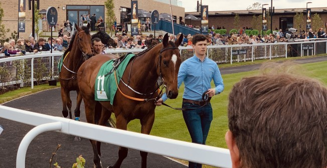 Buying a Racehorse Share in Addlestone